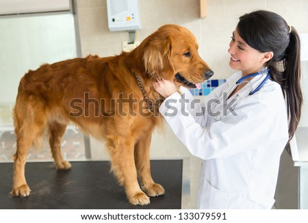 Beautiful dog at the vet getting a checkup - stock photo