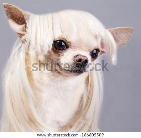 beautiful dog close up portrait - stock photo