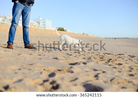 Beautiful dog on the ocean beach background  - stock photo