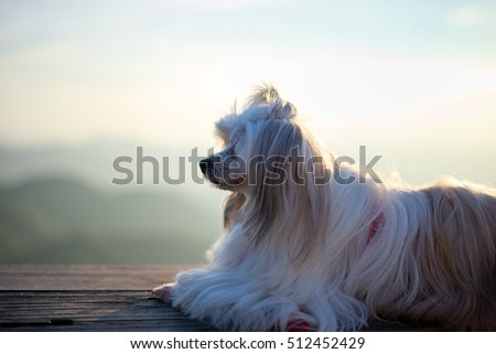 Beautiful dog on the wood table at the sunrise