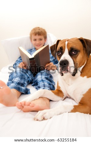 Beautiful Dog Relaxing on Owners bed with Young Child Reading in background - stock photo