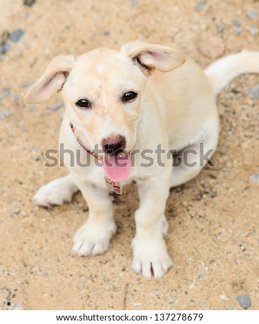 Beautiful dog sitting down on the Sand