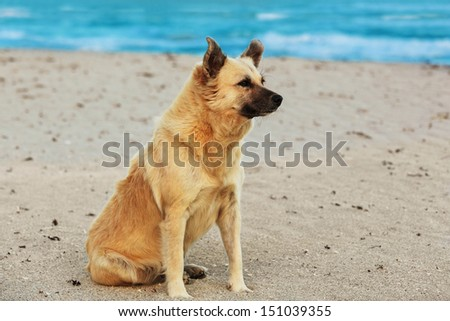 Beautiful dog sitting on the beach