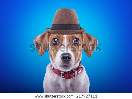 Beautiful dog with hat on a blue background. Funny animals. Hipster dog - stock photo