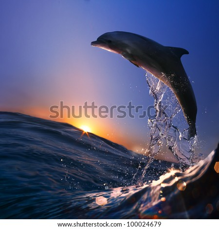 beautiful dolphin jumped from sea wave at sunset time - stock photo
