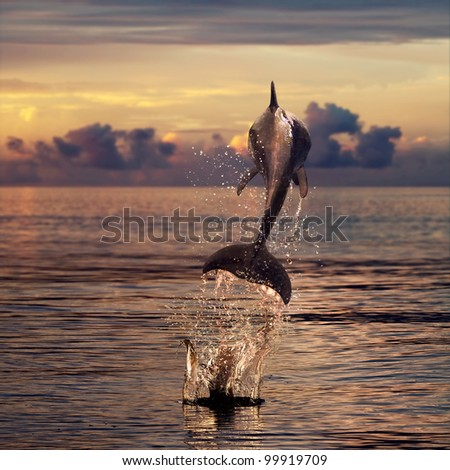 beautiful dolphin jumped from sunset sea - stock photo