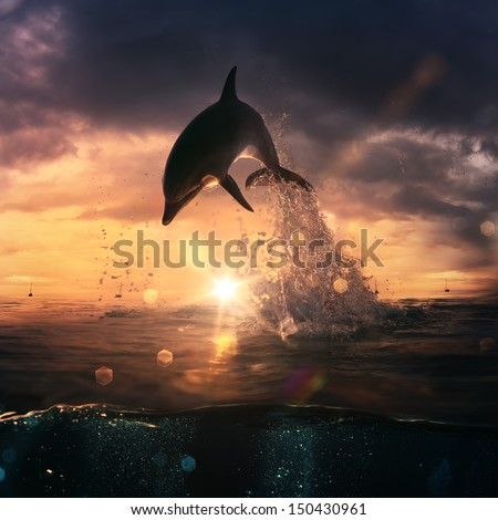 beautiful dolphin jumped from the ocean at the sunset time - stock photo