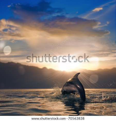 beautiful dolphin jumped from water at the sunset time - stock photo
