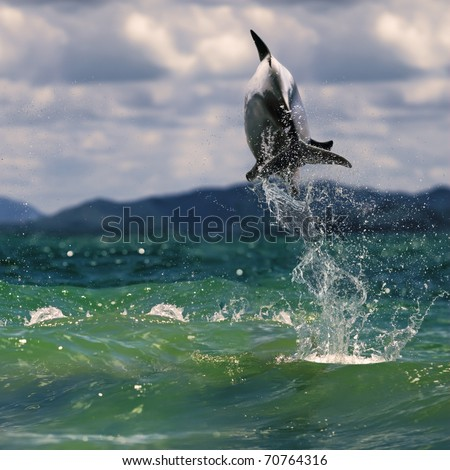 beautiful dolphin jumping up from sea surface - stock photo
