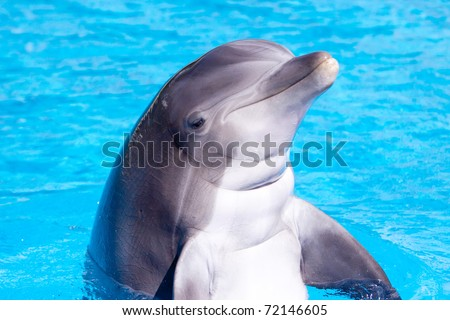 Beautiful dolphin swimming in the blue water - stock photo