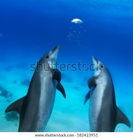 beautiful dolphins playing with air bubbles underwater - stock photo