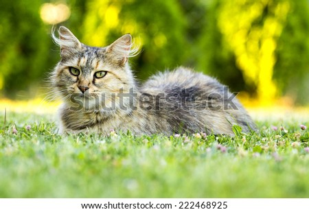 Beautiful domestic cat lying in the grass. - stock photo