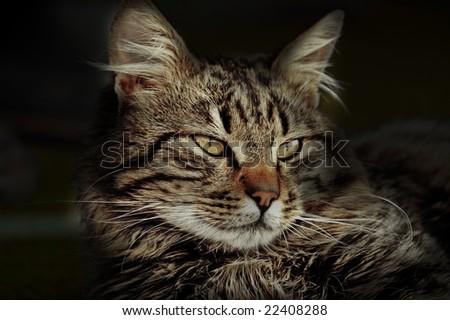Beautiful domestic cat resting - stock photo