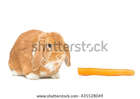 Beautiful domestic rabbit - stock photo