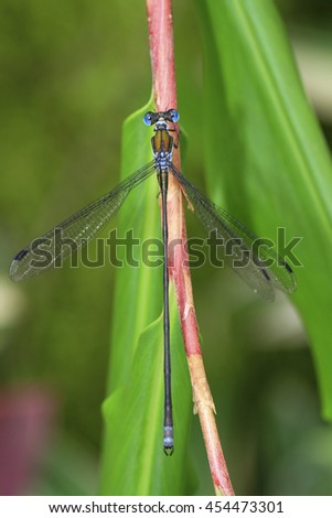 beautiful dragonfly in the forest