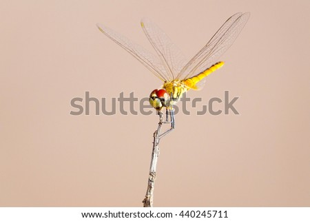 beautiful dragonfly with blurry background,select focus with shallow depth of field.