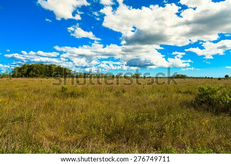 Beautiful dramatic landscape of the Grand Cypress Preserve in the Florida Everglades. - stock photo