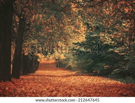 Beautiful dreamy autumn forest with walkiing path - stock photo