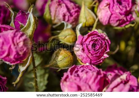 beautiful dry pink roses - stock photo