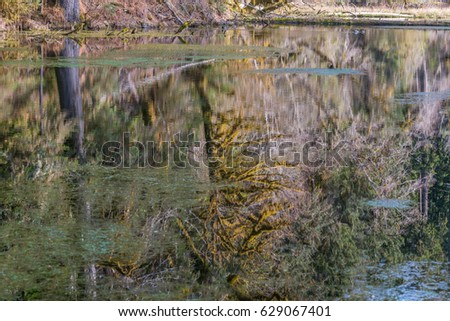 Beautiful ducks swim in a pond. Amazing reflection of fairy forest in the lake. Hoh Rain Forest, Olympic National Park, Washington state, USA
