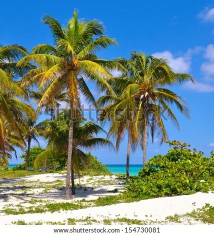 BEAUTIFUL DUNES AND COCONUT TREES ON THE FAMOUS BEACH OF VARADERO, CUBA - stock photo