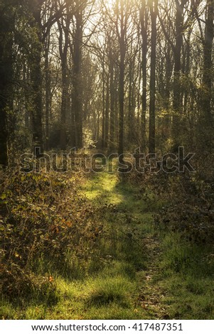 Beautiful early morning forest landscape in Spring with sunlight glow and contrast of light and dark - stock photo