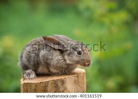 Beautiful easter rabbit agaist green bokeh background.  - stock photo