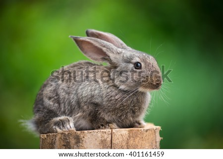 Beautiful easter rabbit baby bunny agaist green bokeh background.  - stock photo