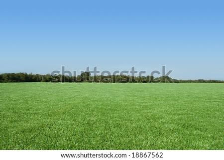 Beautiful empty grass field - stock photo