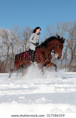 Beautiful equestrian woman in the winter woods - stock photo