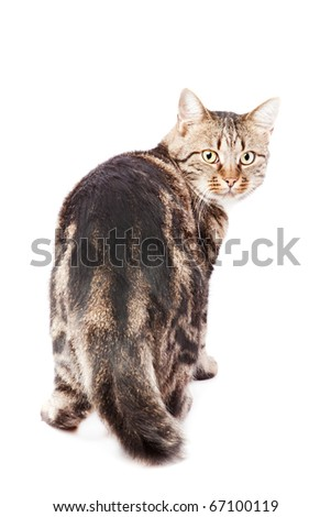 beautiful European cat  on a white background - stock photo