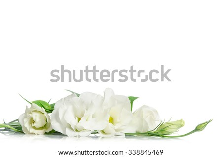 Beautiful eustoma flowers isolated on white background and free space for text at the top - stock photo