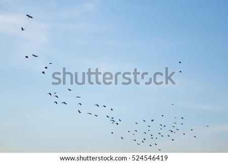 Beautiful evening sky for background.The sky with the  moving birds.