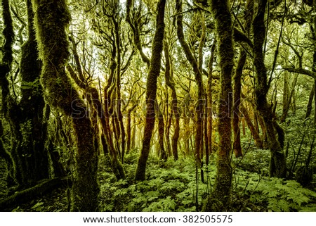 Beautiful evergreen forest in Garajonay national park on La Gomera island in Spain - stock photo