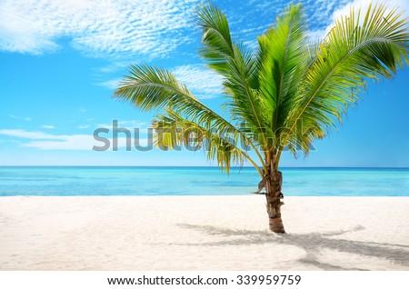 Beautiful exotic beach and coconut palm tree Saona Island, Dominican Republic - stock photo