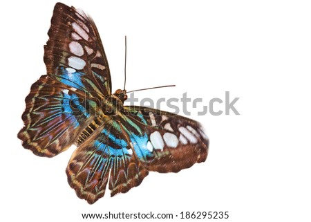 Beautiful exotic butterfly - isolated on white background - stock photo