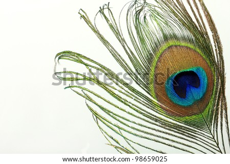 Beautiful exotic peacock feather on white background with copy space. - stock photo