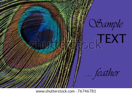 Beautiful exotic peacock feathers on purple background with copy space. - stock photo