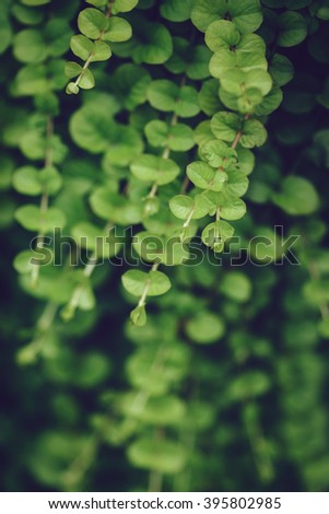 Beautiful fairy dreamy magic light yellow green leaves foliage, toned with instagram filters in retro vintage style effect, soft selective focus, blurry background, copyspace for text - stock photo