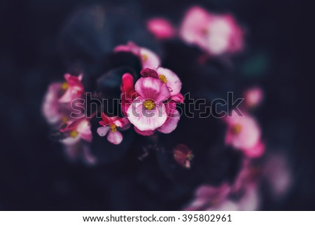 Beautiful fairy dreamy magic pink purple flowers on faded blurry background, toned with instagram filters in retro vintage style with film effect, soft selective focus, copyspace for text - stock photo