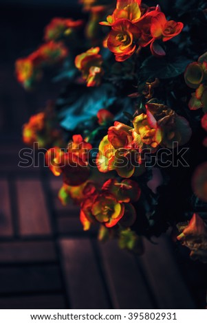 Beautiful fairy dreamy magic red and yellow flowers with dark green leaves, retro vintage style, shabby chic effect, soft selective focus, blurry background, copyspace for text - stock photo