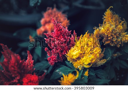 Beautiful fairy dreamy magic red and yellow flowers with dark green leaves, retro vintage style, soft selective focus, blurry background, copyspace for text - stock photo