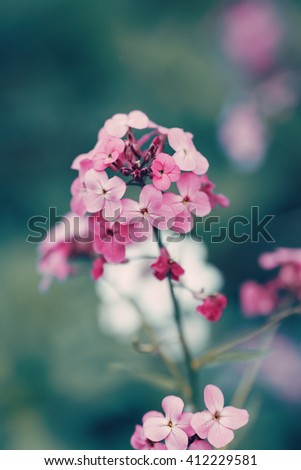 Beautiful fairy dreamy magic red pink flowers with dark green blue leaves, blurry background, toned with instagram filter in retro vintage color pastel, soft selective focus, shallow depth of field - stock photo