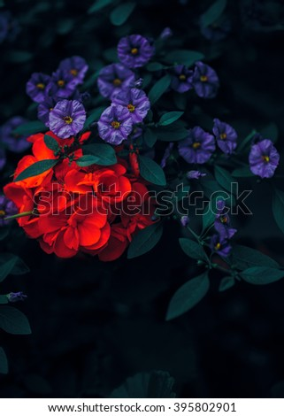 Beautiful fairy dreamy magic red ruby and purple flowers with dark green leaves, retro vintage color, soft selective focus, blurry background, copyspace for text - stock photo