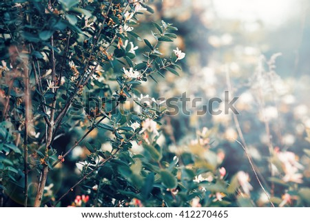Beautiful fairy dreamy magic white tree flowers with dark green leaves, toned with instagram vsco filter in retro vintage washed out pastel, soft selective focus, lens sun flare, copyspace - stock photo