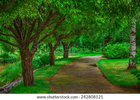 Beautiful fairy walkway with wide trees. Vibrant green colors. - stock photo