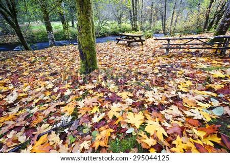 Beautiful fall colour at silver falls - stock photo