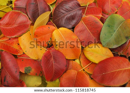 Beautiful Fall foliage in a colorful arrangement. - stock photo