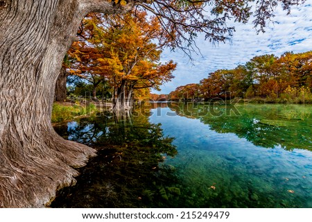 Beautiful Fall Foliage of Giant Bald Cyprus Trees Surrounding the Clear Frio River, Texas. - stock photo