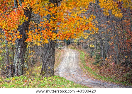 Beautiful Fall scene on curved unpaved road with colorful leaves on trees and in the road - stock photo